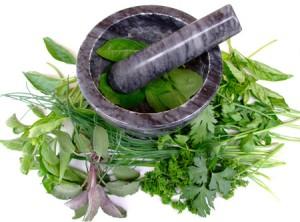 Chanvre bio plante médicinale antioxydante