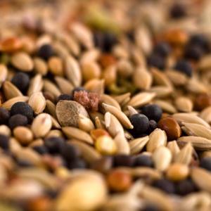 Graines de chanvre bio alimentaire