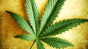 Les premiers vendeurs de cannabis de l'histoire, 5 000 ans avant JC